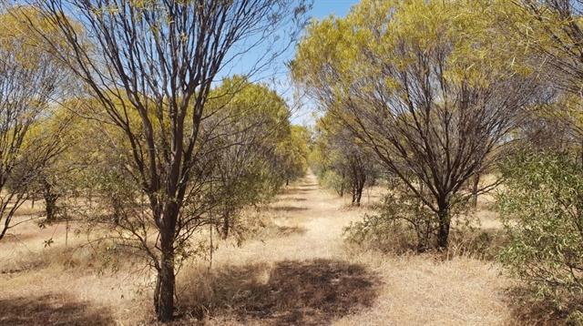 Maple Leaf Investments buy $600,000 sandalwood plantation